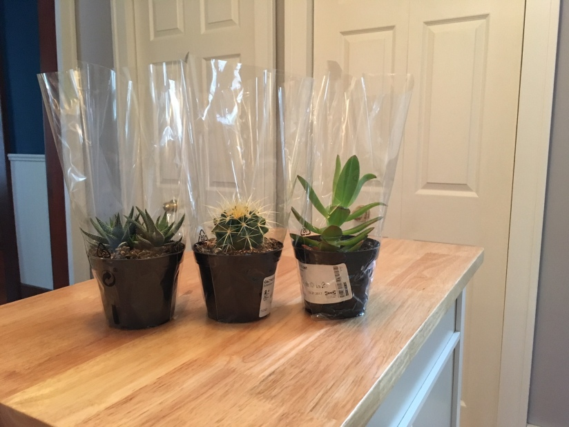 These are the three plants I chose for the terrarium.