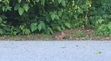 It's a Bun! I love running into little bunnies.